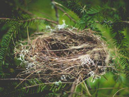 Nesting ou síndrome do ninho
